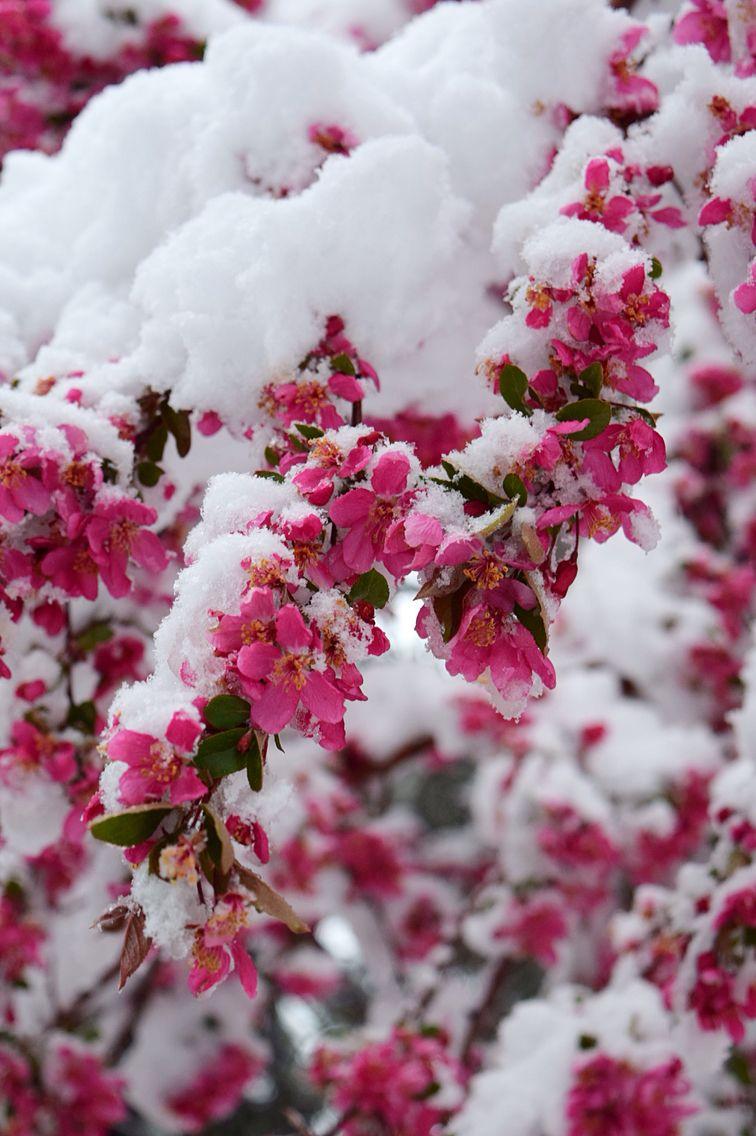 Spring Time In Colorado Flower Lockscreen Rose Flower Wallpaper Winter Flowers