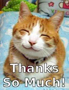 Thank You Cat Meme : thank, Thank, Memes,, Images, Funny, Thanks, Cats,, Happy