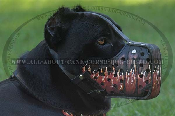 Comfortable Handmade Leather Cane Corso Muzzle With Images