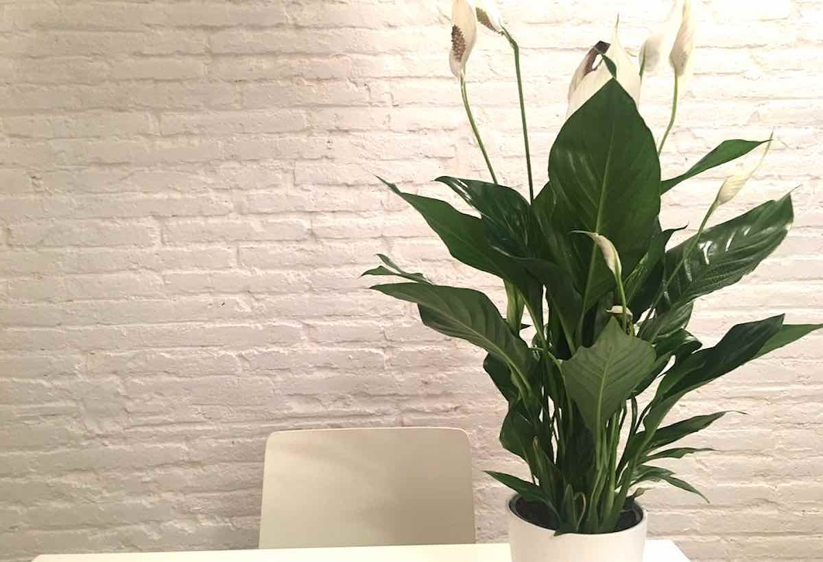 Put These 5 Plants In Your Bedroom Window for a Better Night's Sleep is part of bedroom Window Night - Studies conducted by NASA have proven that several of these plant species can lead to a better night's sleep and better air quality