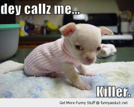 a75821b78a8a91cf267aa399f26afcb0 they call me killer cute animals 03 pinterest angry face