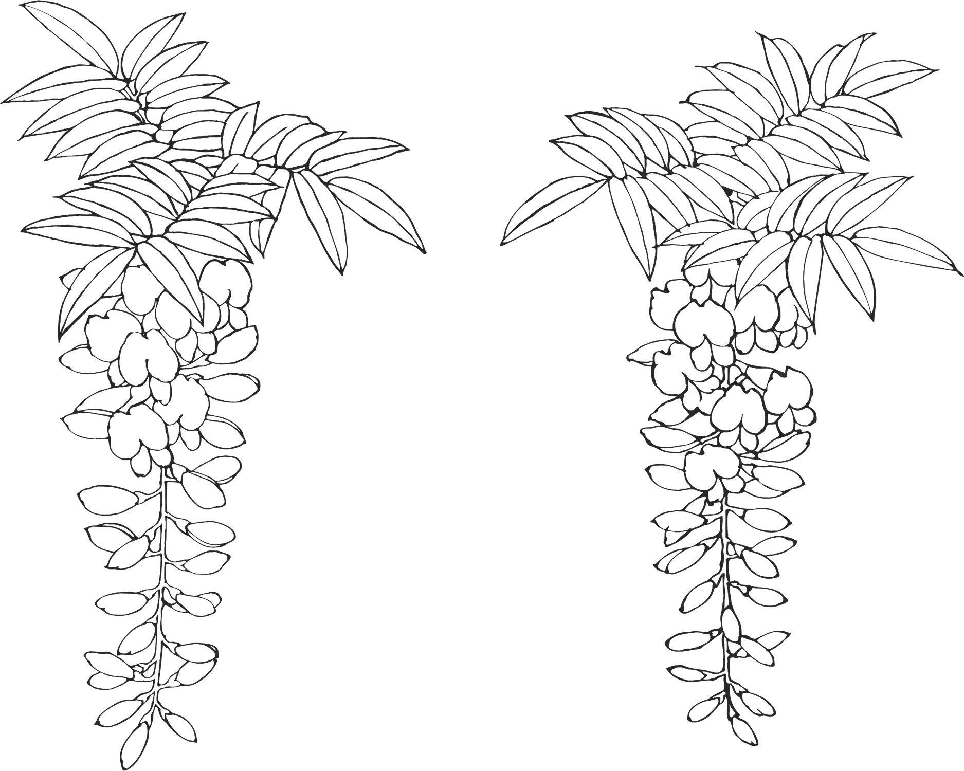 白黒の花のイラスト-白黒・藤 | dessin | Pinterest | Embroidery, Needlepoint and Japanese embroidery