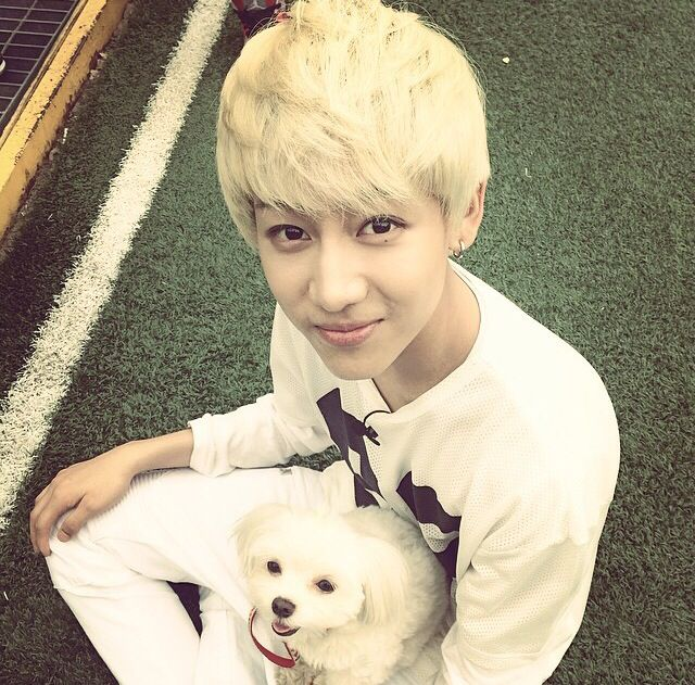 BamBam {GOT7} with blonde hair is good and all, but throw in a puppy and you've got solid GOLD!