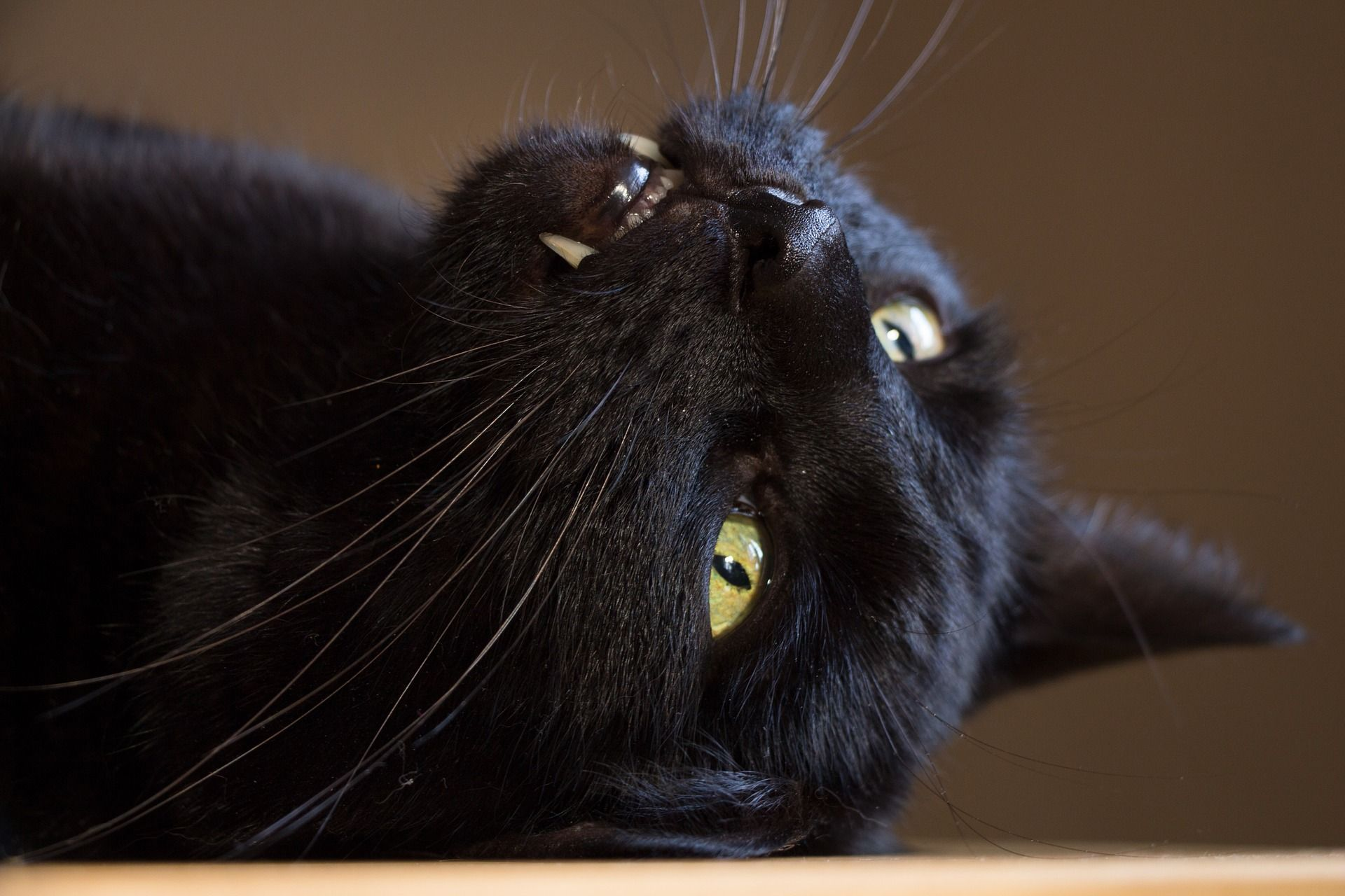 Angry Black Cat Wallpapers With Teeth