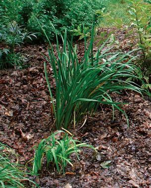 Aprovechar las hojas caídas para mejorar el suelo