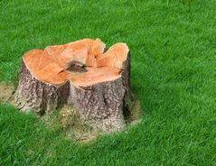 Nachdem Sie In Ihrem Garten Einen Baum Gefällt Haben Bleiben Die