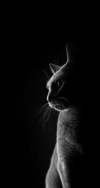 Pin Oleh Inga Animalis Di Animal Tour In B W Binatang Kucing Hitam Kucing Betina