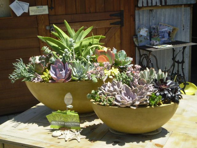 Simply Stunning Succulents In Containers Succulent Garden Outdoor Succulents Garden