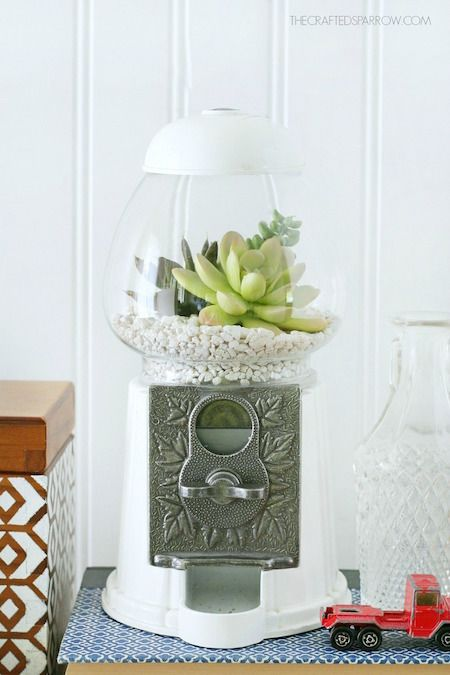 Photo of How To: Turn a Gumball Machine into a Succulent Planter (Curbly)