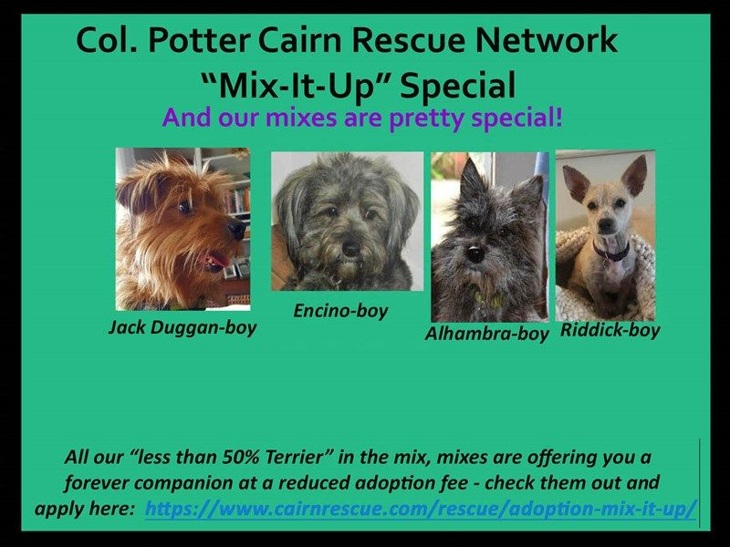 Col Potter Cairn Rescue Network Cairnrescue Adoption