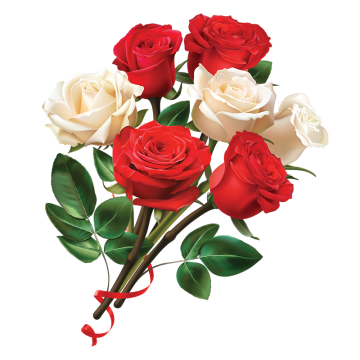Red and white rose flower PNG and Vector Rose flower png