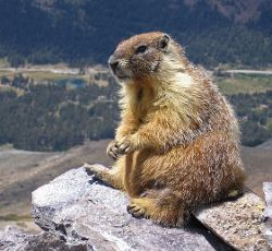What the...? Marmots drink antifreeze and eat electronic ... on deer eat, penguins eat, cows eat, tigers eat, snakes eat, spiders eat, seals eat, squirrels eat, mice eat, rodents eat,