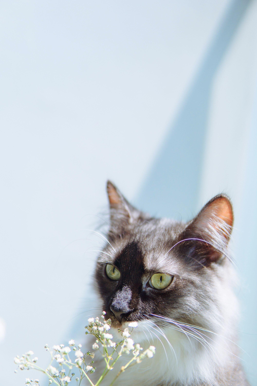 Update. September TShirts Showcase Cat aesthetic, Green