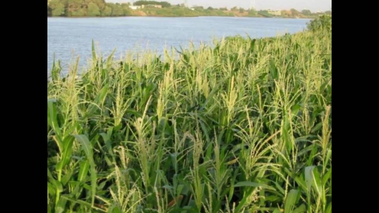 Sudan صور من السودان على انغام حافظ ابراهيم حتى نلتقى Wmv Herbs Plants