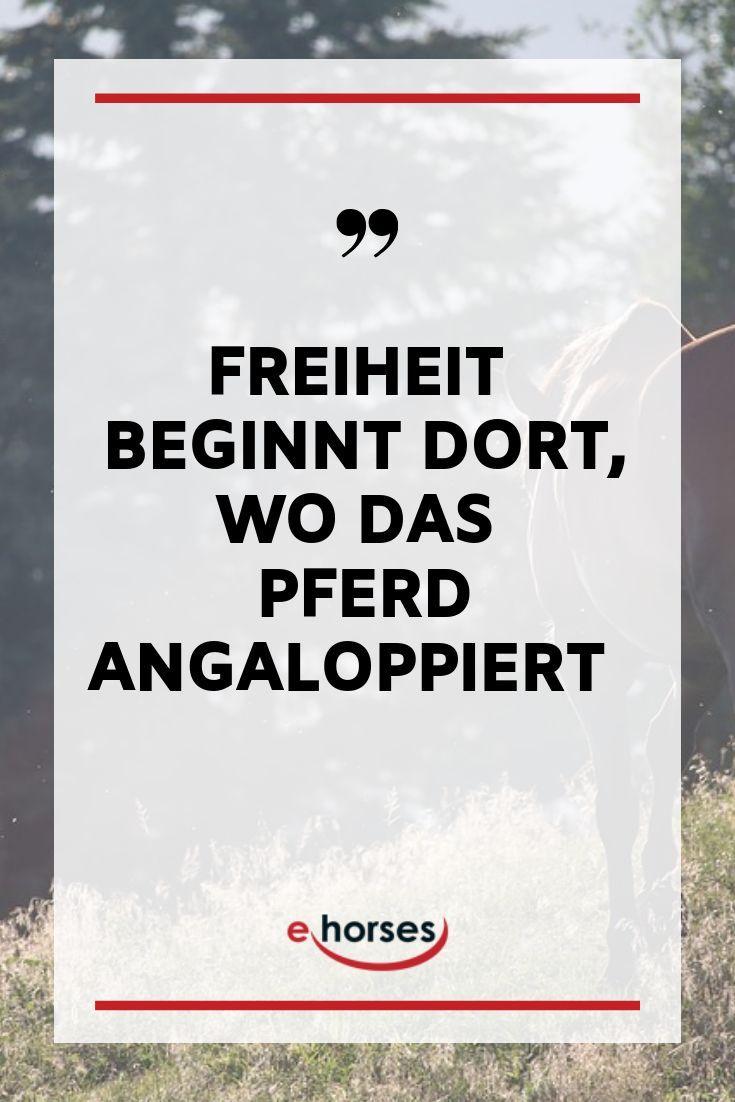 Freiheit, Pferd, Reiten, Liebe