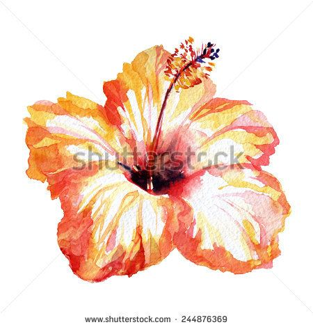 Gorgeous Hibiscus Flower Orange Red Watercolor Flower Red Painted Flower Watercolor Hibiscus Flower Painting Watercolor Flowers Flower Drawing