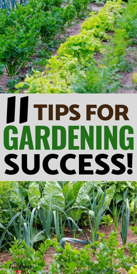 Vegetable garden for beginners: 11 tips for success, # beginners # the #success # for # vegetable garden ...#beginners #garden #success #tips #vegetable