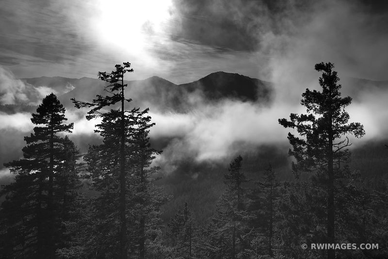 Framed Photo Print of HURRICANE RIDGE CLOUDS FOREST