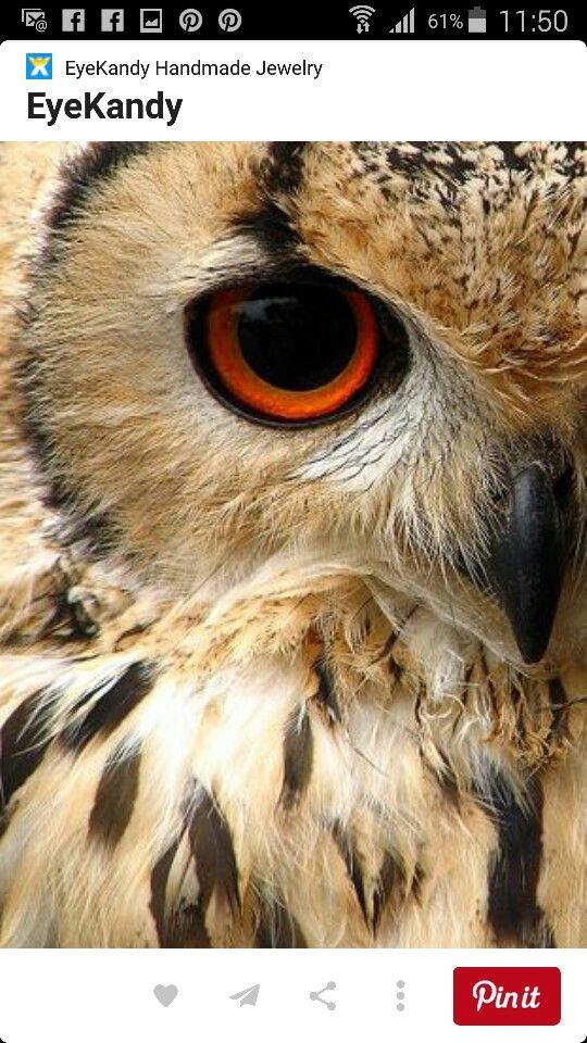 Eule Auge Detail