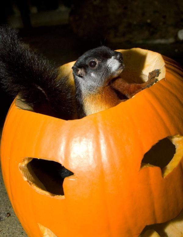 prevostss squirrel national zoo halloween