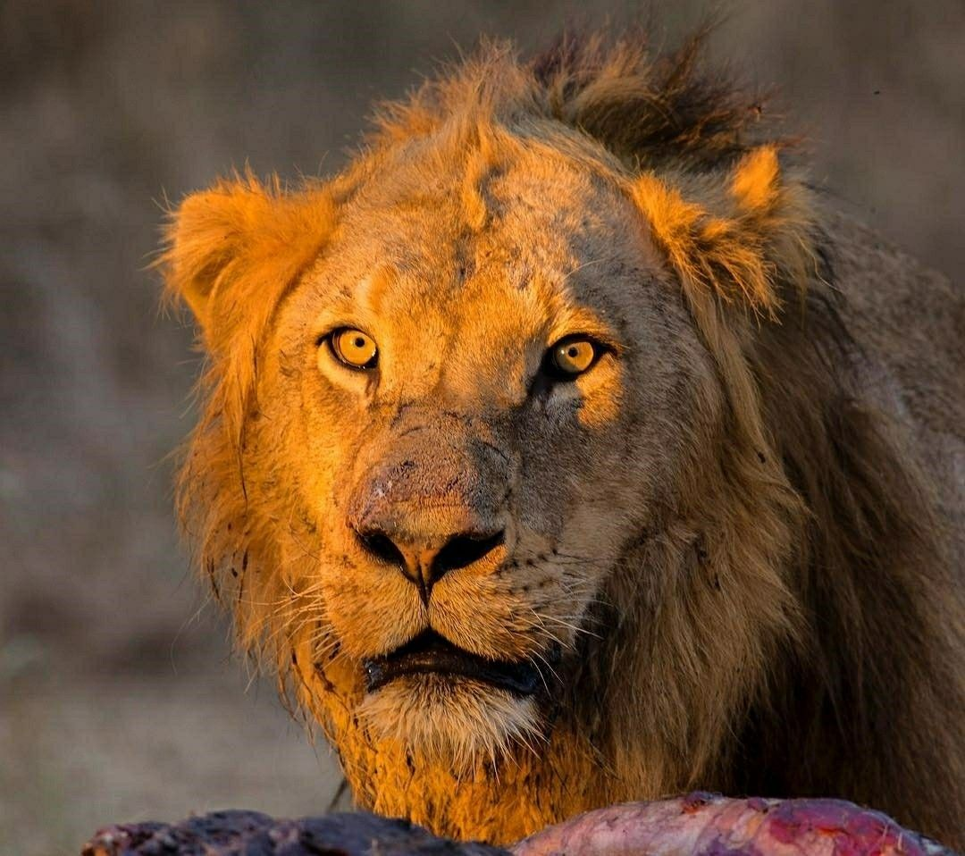 35+ Lion 3d Image Camera