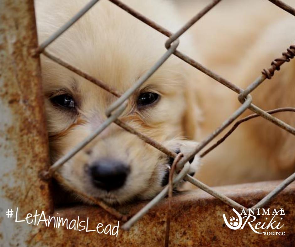 7 Smart Ways You Can Help Stop Puppy Mills Puppy Mills Dog