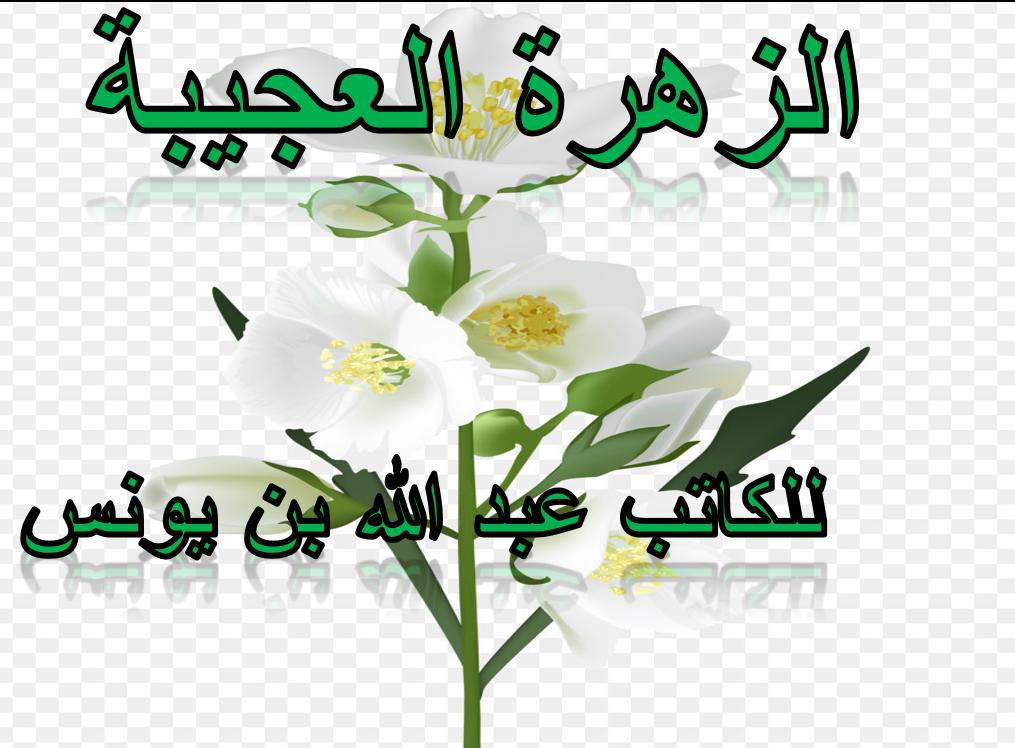 درس الزهرة العجيبة الصف الثالث مادة اللغة العربية بوربوينت