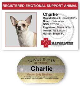 Service Animal Registration Us Service Animals Service Animal Service Dogs Therapy Dogs
