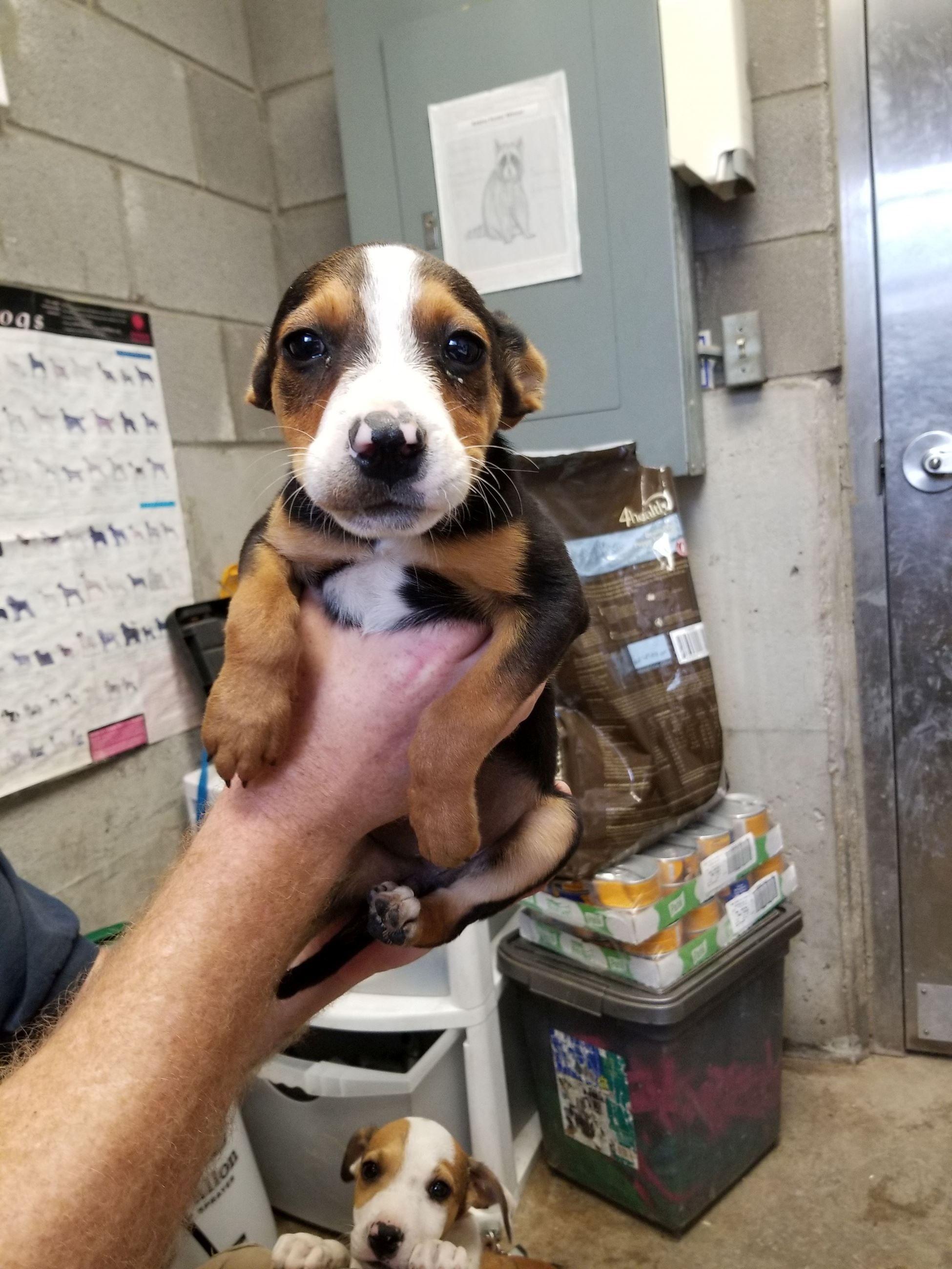 K33_153451 Big Spring Texas | Animal shelter, Animals ...