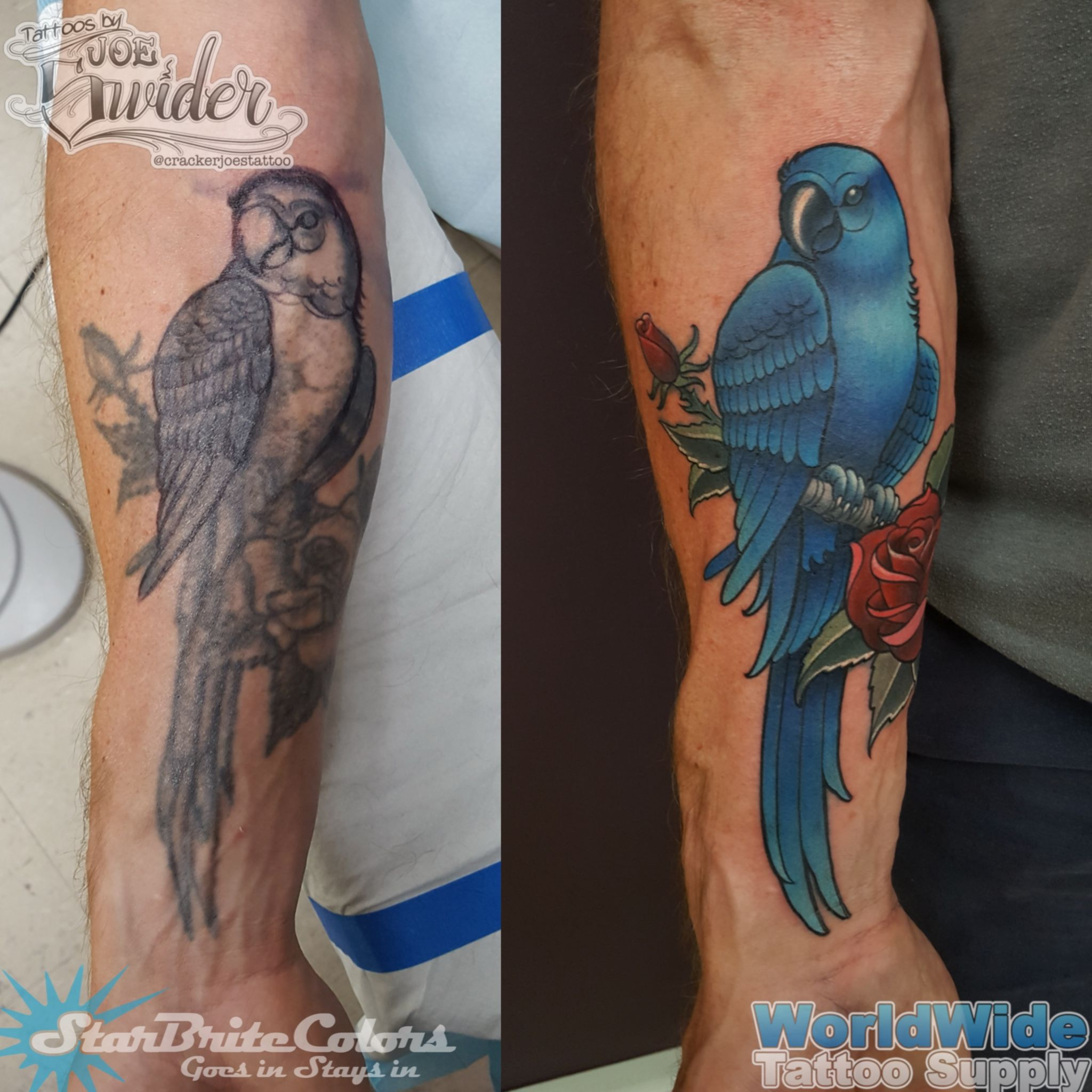 Parrot Tattoo Redo By Cracker Joe Swider In Connecticut Parrot