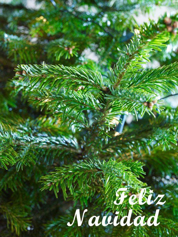 #Arbol de navidad #postales de navidad #navidad