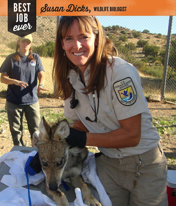 Best Job Ever Susan Dicks Wildlife Biologist And Veterinarian