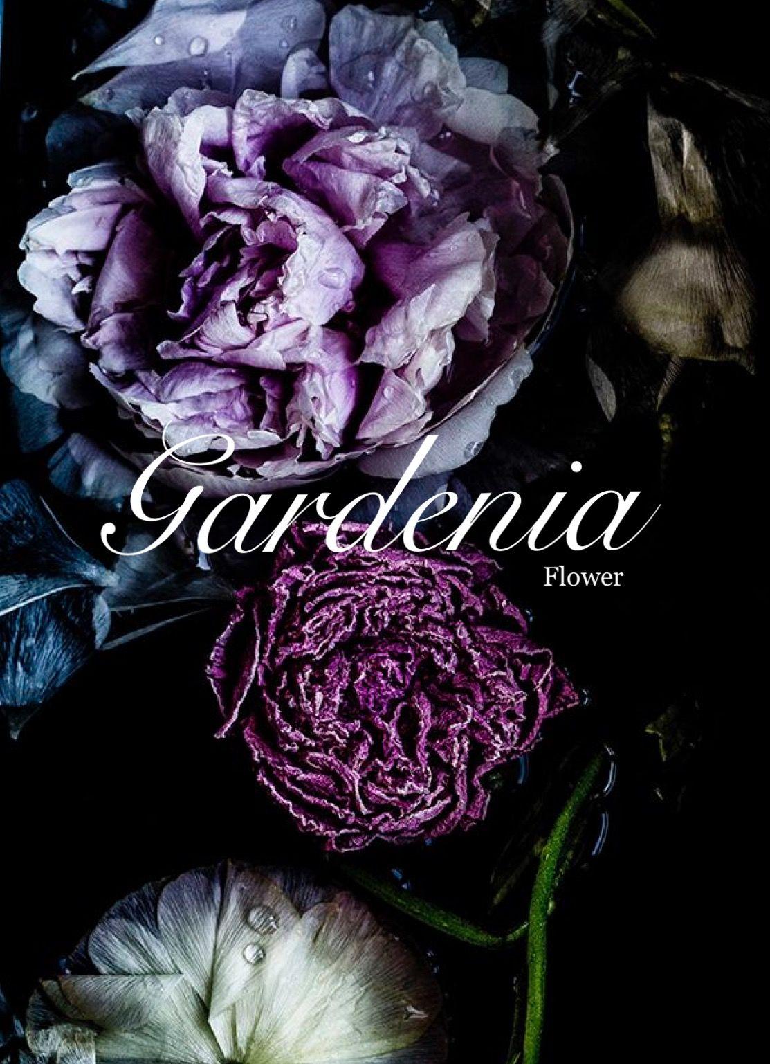 Gardenia Name Girl Names Feminine Names Middle Names Flower Names Uncommon Names Names That Start With G Baby Girl Name Dark Flowers Dark Floral Floral