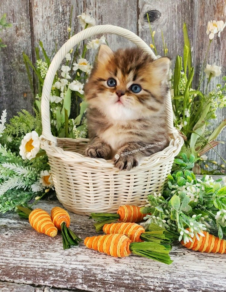 Pin On Cute Kitten Pictures