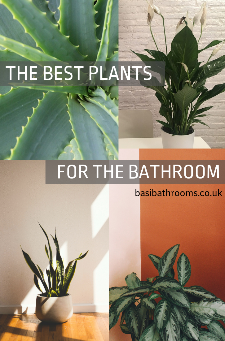 The Top 5 Best Plants That Will Grow And Thrive In Your Bathroom Plants Cool Plants Bathroom Plants