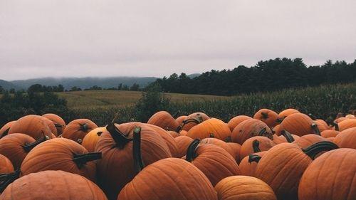 Výsledek obrázku pro fall aesthetic tumblr