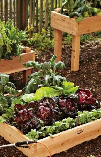 Start Planning Your Edible Garden