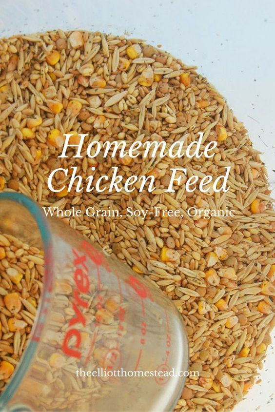 Organic Homemade Chicken Feed Homestead Chickens Pinterest