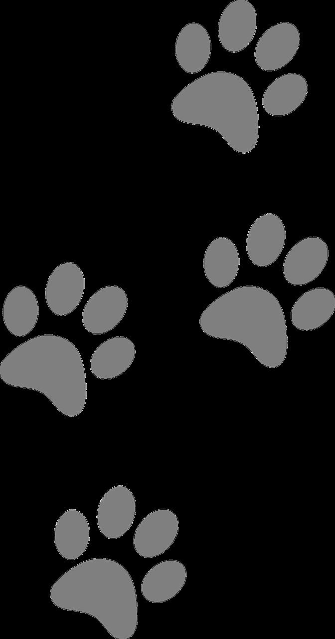 Pin Em Dog Paw Art