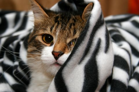 Moving can be tough on #cats because they lose their sense of familiar territory. Make the adjustment smooth. #VCAAnimalHospitals