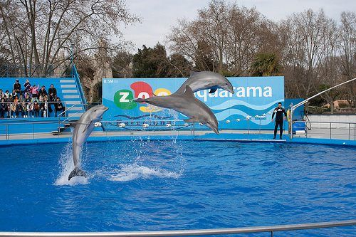 Enjoy Fun In Barcelona Zoo See Dolphins Jumping And Playing Http