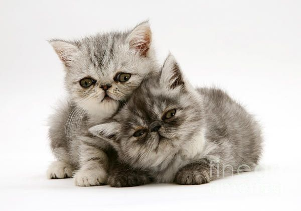 Pin On Cats So Cute