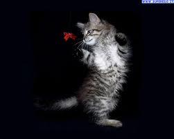 gatto romantico