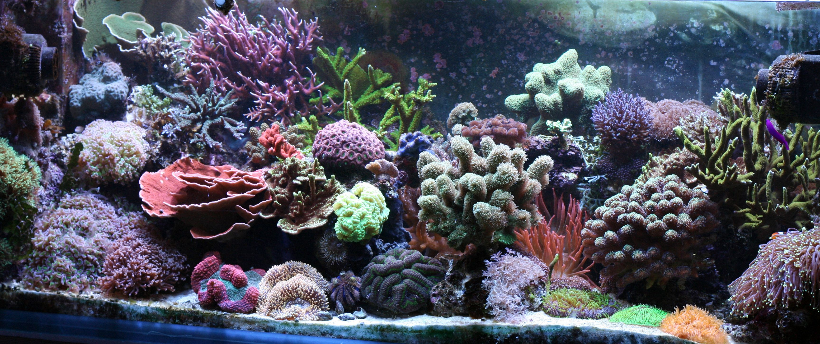 Saltwater aquarium - Salt Water Aquarium Tiedosto Reef Aquarium At Home Jpg Wikipedia