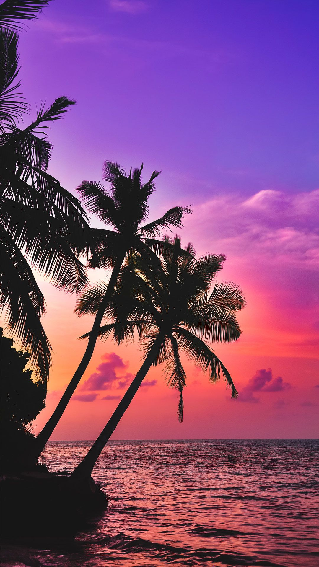116 Free Beach Wallpapers For Your Phone Desktop Beach Wallpaper Sunset Wallpaper Palm Tree Sunset