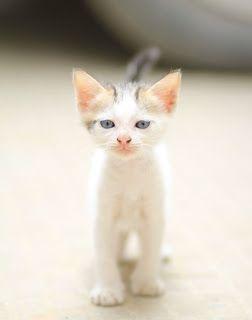 Proud little kitten