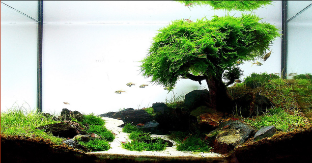Java Moss Is A Great Plant For The Fish Tank And Aquascape This Article Covers Java Moss Care Carpet Fish Tank Plants Live Aquarium Plants Aquascape Aquarium