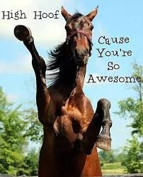 Image result for horse thank you | Funny horses, Horses
