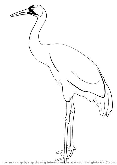 Learn How To Draw A Crane Birds Step By Step Drawing Tutorials