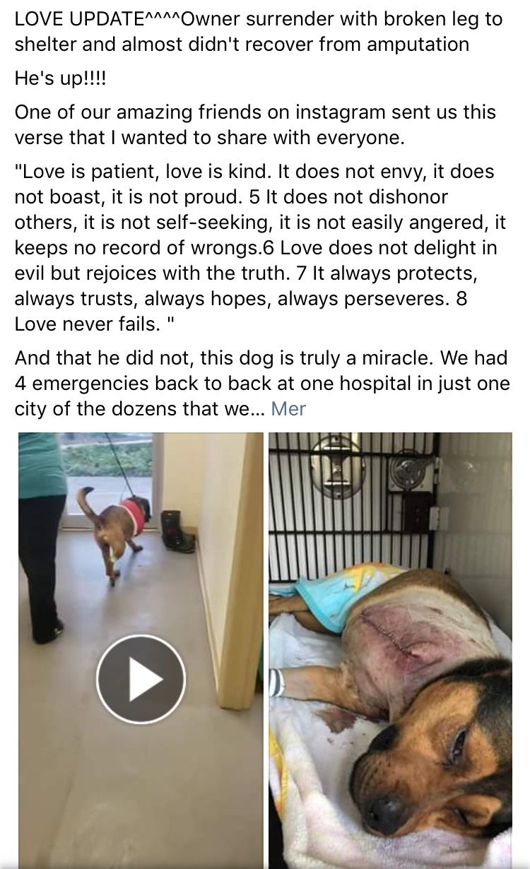 Pin By The Davinci Foundation For Animals On Dfa S Rescue Across The Nation Global Outreach Adoption Board Please Adopt Dogs Broken Leg Actions Speak Louder Than Words